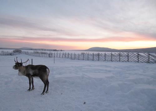 Jukkasjärvi sámi siida