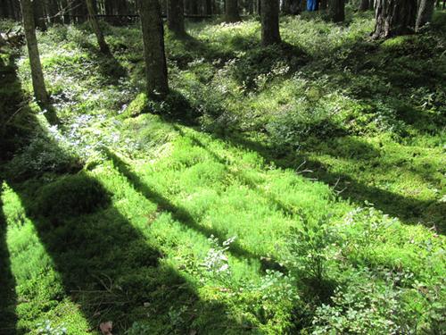 Woods in Sweden